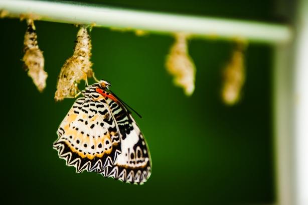 A new moth